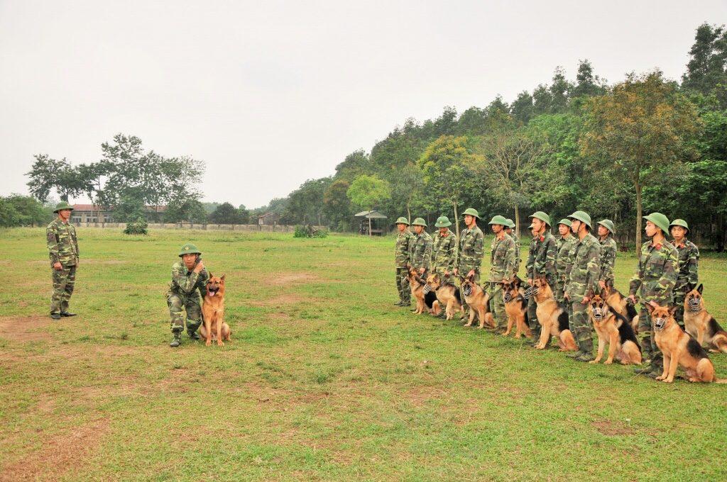 Bãi tập huấn luyện chó