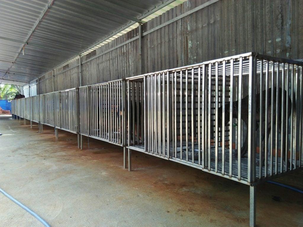 Chó tại trường huấn luyện chó Thành Tài được tách biệt từng chuồng
