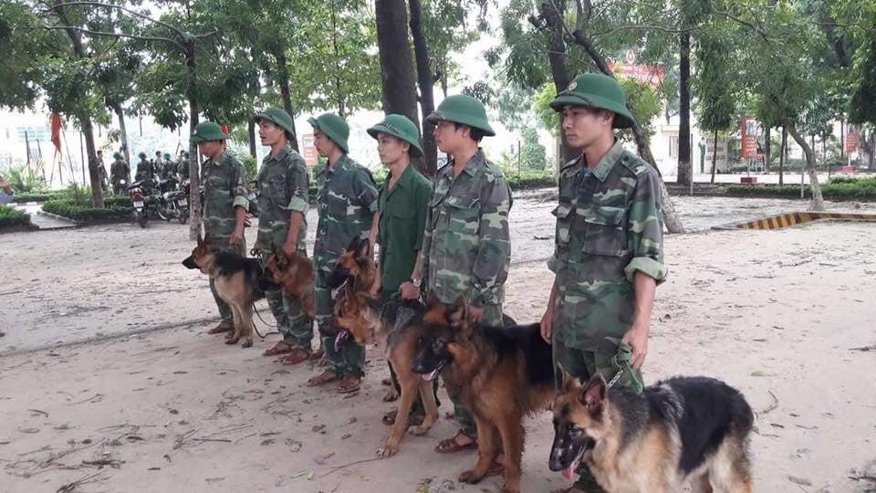 cách huấn luyện chó nghiệp vụ Becgie