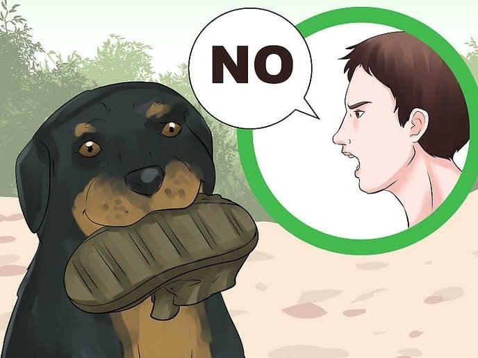 cách huấn luyện chó không cắn phá đồ đạc