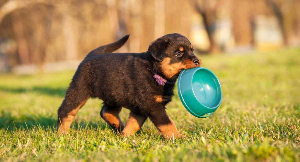 cho rottweiler dạo chơi ở các địa hình khác nhau