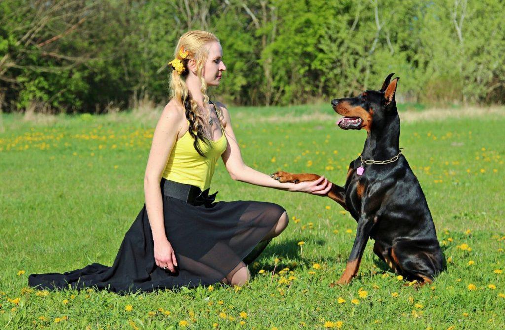 dạy chó dữ những hành động thân thiện