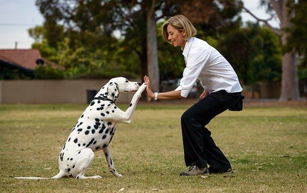 cách huấn luyện chó lệnh bắt tay