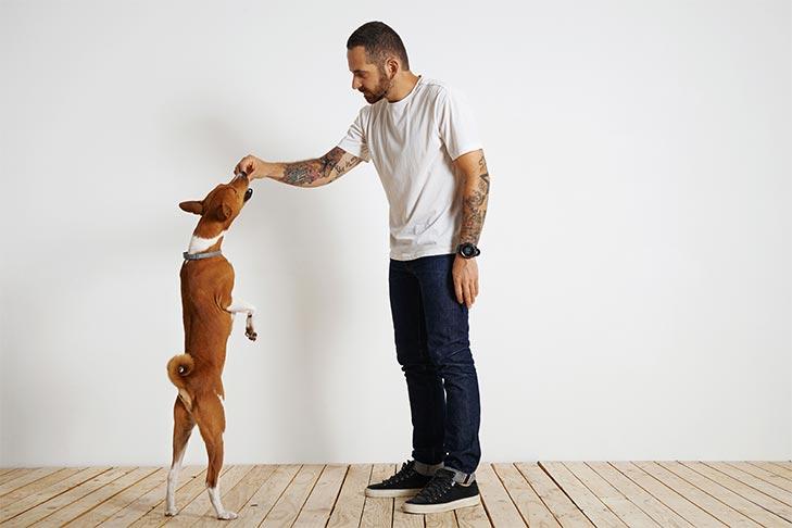 dạy chó lệnh đứng