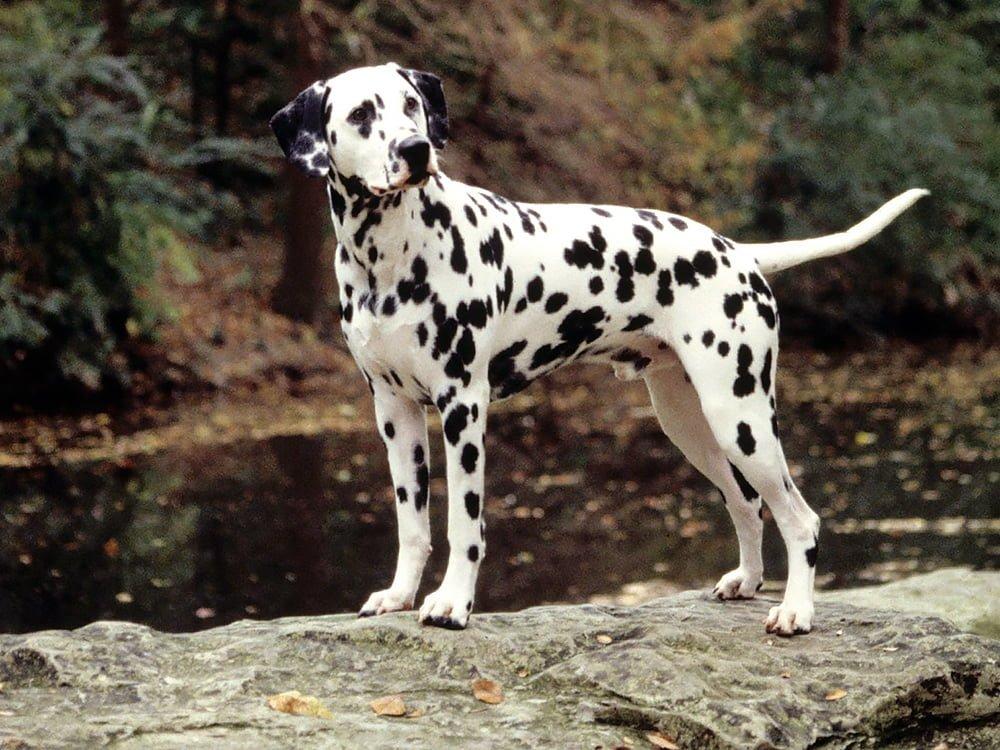 Chăm sóc chó Đốm không quá vất vả như mọi người nghĩ