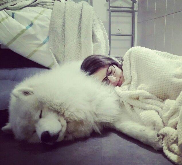 chó lông trắng samoyed