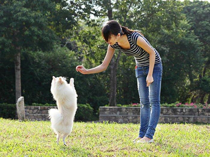 cách dạy chó lạy
