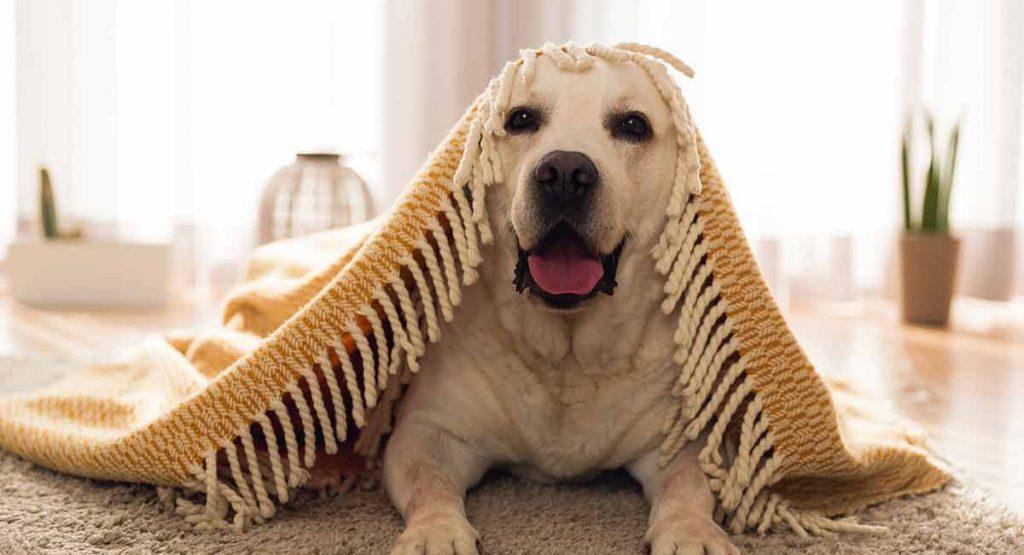 tạo cho chú chó một không gian thoải mái