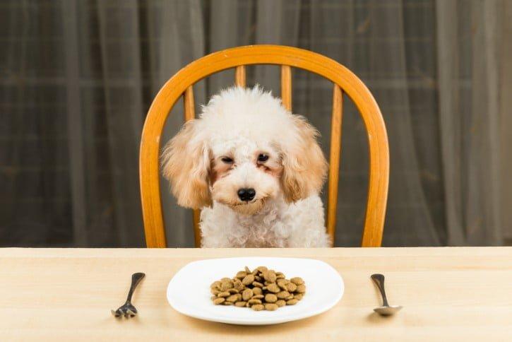 chăm sóc chó Poodle đúng cách