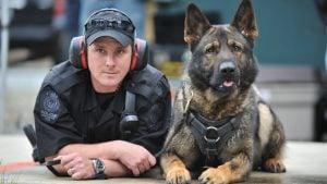 huấn luyện chó nghiệp vụ bài bản nhất