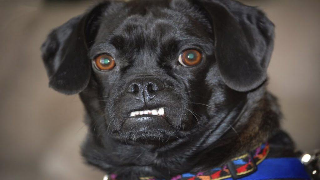 cách dạy chó hư thành ngoan tại nhà