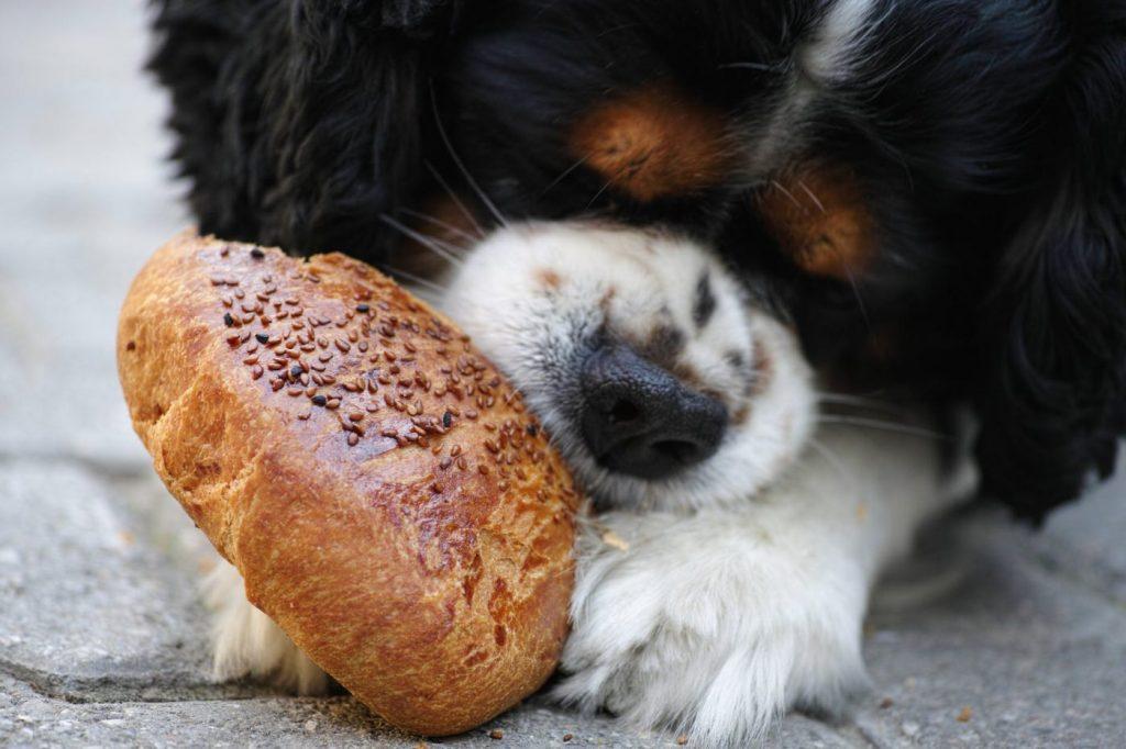 cách huấn luyện chó không ăn bậy