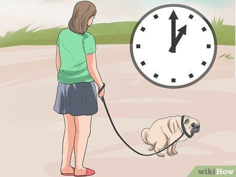 cách dạy chó pug đi vệ sinh đúng chỗ