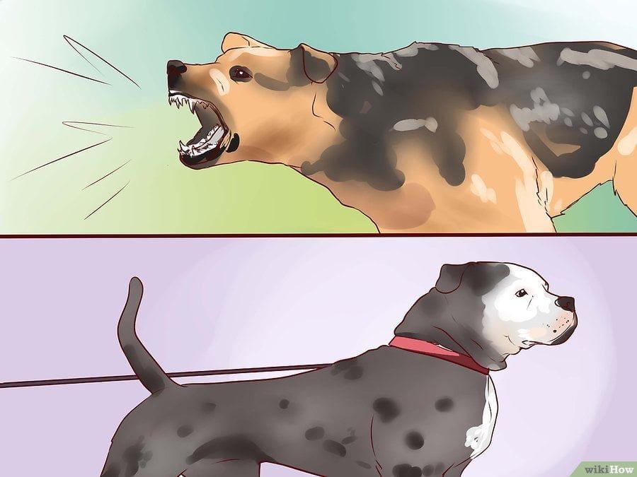 cách huấn luyện chó nghiệp vụ bảo vệ chủ