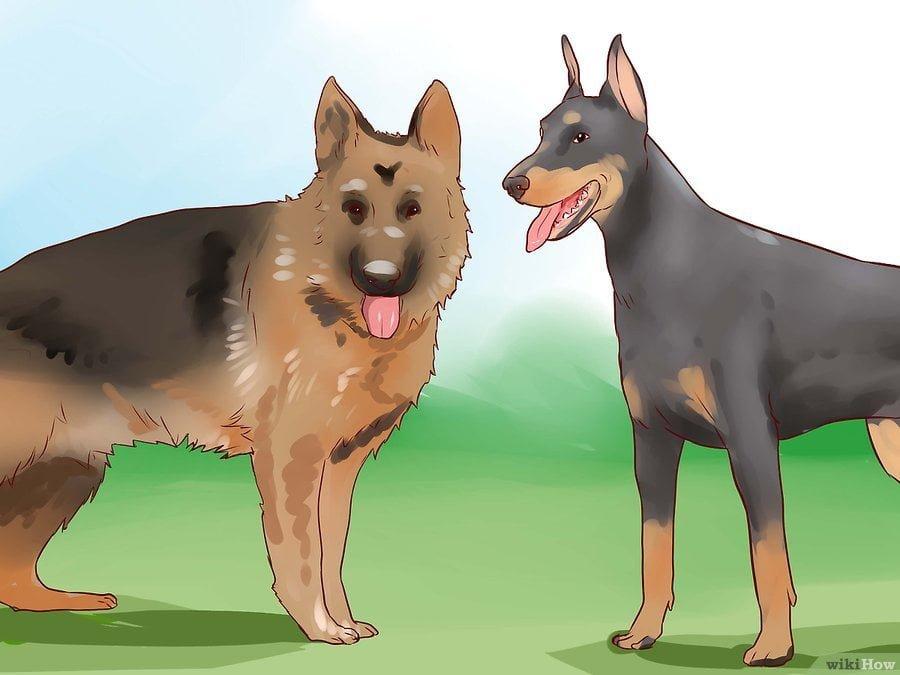 Phân biệt được giữa chó bảo vệ và chó tấn công